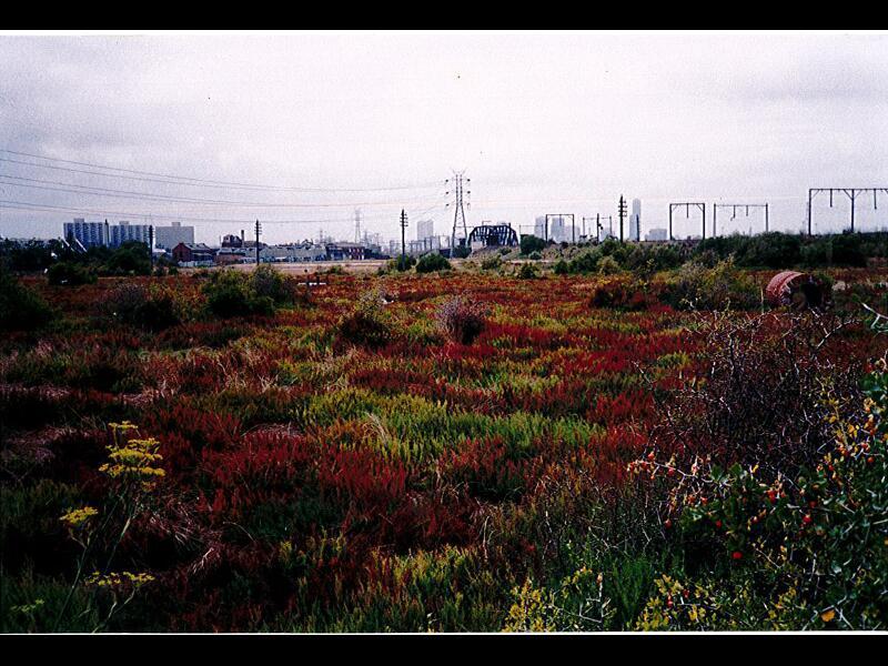 History-Newells Paddock Salt marsh JOY 1988