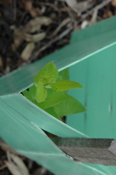 June-1-2014-plants (14)