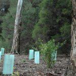 June-1-2014-plants (8)